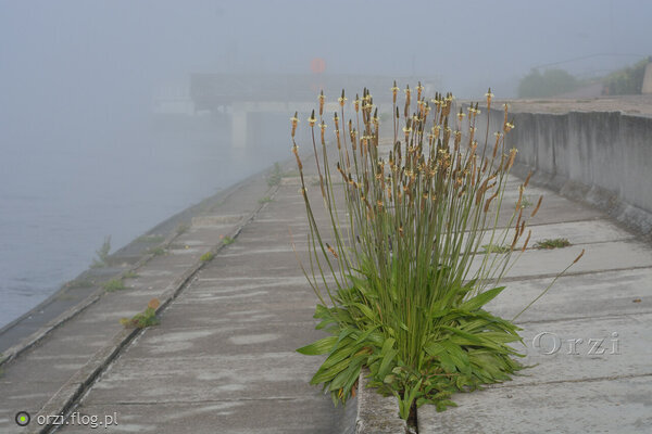 https://s28.flog.pl/media/foto_middle/13201571_torun-bulwar--roslinnosc-z-gatunku-betonowki-.jpg
